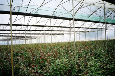 UV stabilized film, UV greenhouse films, ultraviolet stabilised protective film - Image